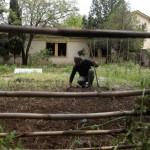Halk arasında 'Afrika hastalığı' olarak bilinen bulaşıcı hastalık Adana'da 100 hayvanın ölümüne yol açtı