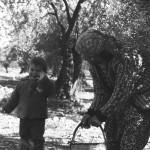Zeytini bu kez ayaz vurdu, üretimin yüzde 80'i yağlık oldu