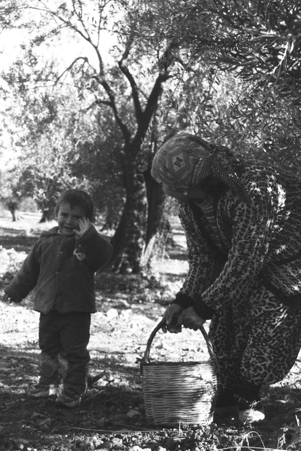 Kırsal itirazını Hayır'la göstermiştir / Adnan Çobanoğlu